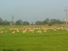 reindeer breeding cultivation of deers breeding fallow deers
